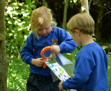 Reception study leaves in forest school
