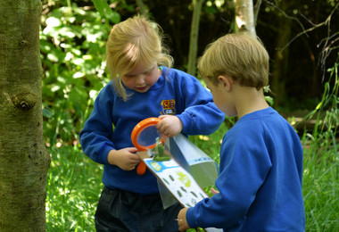 Tree Detectives Investigate in Forest School