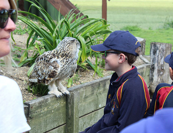 Lower shell boy meeting owl at raptor foundation 2019