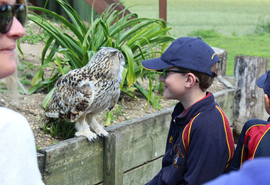 Shell's Rapturous Encounter with Birds of Prey
