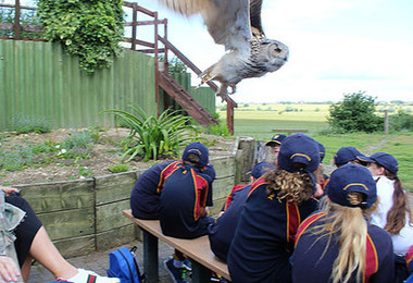 Lower shell watch bird show at raptor foundation 2019