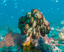 Colourful plants on dive trip 2019