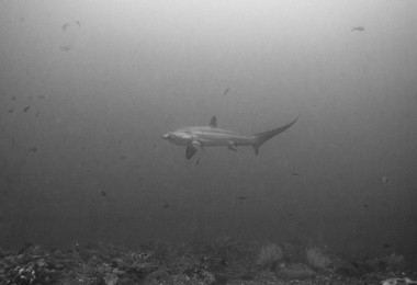 Shark on dive trip 2019