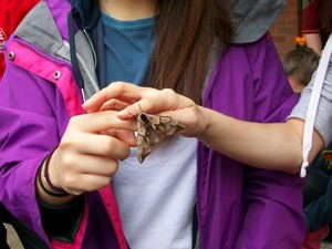 Moth on Lower Sixth Biology Trip
