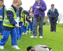 Feeding the ducks at Hyde Hall Year 1 Trip