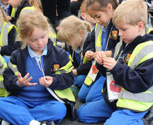Studying broadbean seeds at Yr 1 Hyde Hall Trip