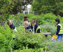 Year 1 on RHS Gardens Hyde Hall Trip