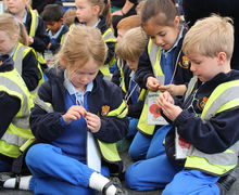 Year 1 Studying broadbean seeds at RHS Hyde Hall