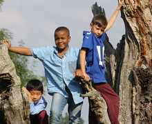 Prep School Boarders in Tree