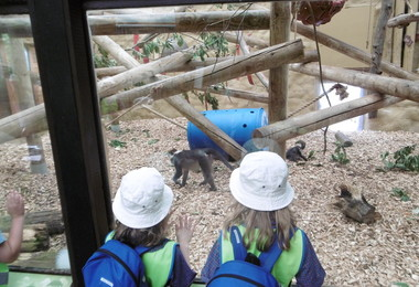 Pre-Prep pupils at Colchester Zoo