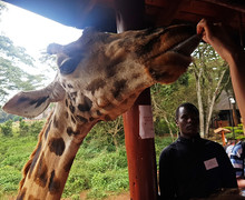Giraffe visiting on Kenya Trip 2018
