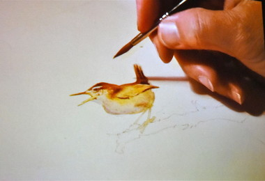 Jackie Morris drawing at Festival 2019