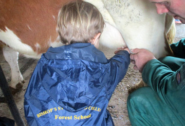 Reception pupil milking at boydells farm