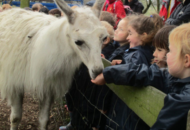 Reception pupils with animals at boydells farm