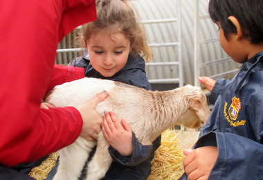 Reception pupils with lamb at boydells farm