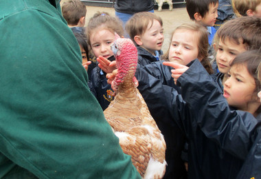 Reception pupils with turkey on boydells farm