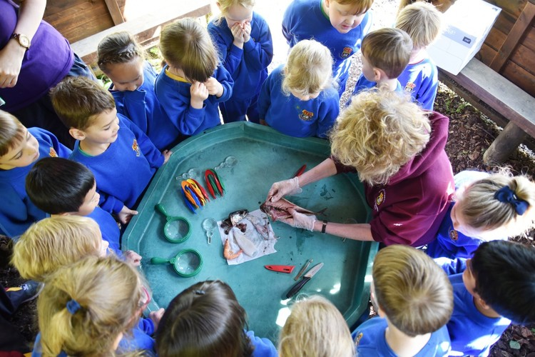 Mrs Prowse dissects fish in Reception forest school