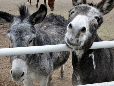 Charity - Working Horses, Donkeys and Mules