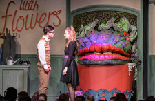 Little shop of horrors 0447