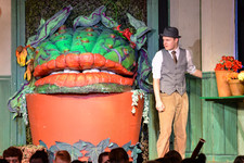 Little shop of horrors 0468
