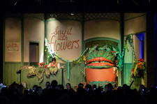 Little shop of horrors 0486