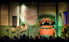 Little shop of horrors 0488