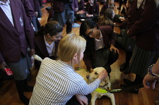 Guide dogs christmas fair 10