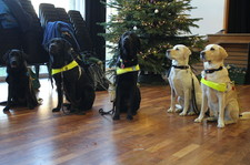 Guide dogs christmas fair 33