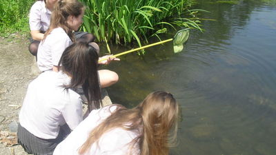 Geographers go Pond Dipping