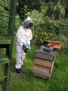 Bee keeping september 5