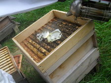 Bee keeping september 8
