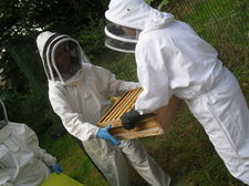 Bee keeping september 19