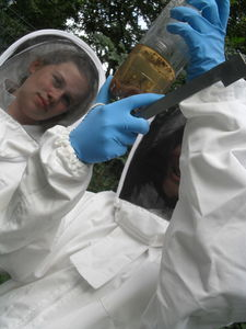 Bee keeping september 21