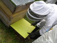 Bee keeping september 28