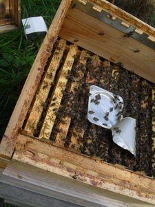 Bee keeping september 36