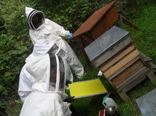Bee keeping september 49