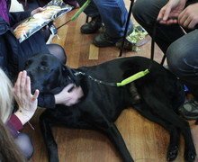Guide dogs christmas fair 5