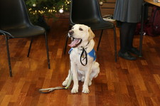Guide dog xmas fair dec 15 1