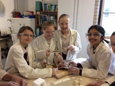 STEM Rat Dissection (3)