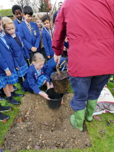 Kingshott tree planting 2019 (25)