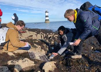 Biologists investigate beach ecology